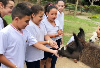Day Camp – Mini Fazenda Pet Zoo - Alunos do Ensino Fundamental I2